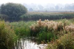 Misty Morning (robin denton) Tags: ywt yorkshirewildlifetrust northyorkshire yorkshire wildlifetrust waterscape landscape flora nature