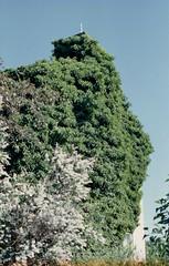 Overgrown Tallkrogen (Trixi Skywalker) Tags: expired film canon av1 50mm 18 stockholm sweden sverige overgrown plant kodak gold 200 kodacolor