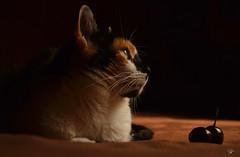 DSC_0275 (leporcia) Tags: olivia gatos