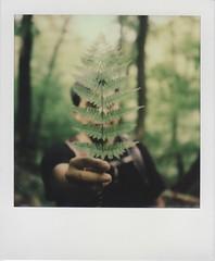 Polaroid_20120825-2-PX680-V4C (stephervescent) Tags: sx70 hiking beacon impossibleproject v4c px680