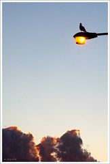 Sentinal (Andy Marfia) Tags: sunset chicago clouds iso200 streetlight pigeon uptown f8 montrosebeach 1400sec 1685mm d7000