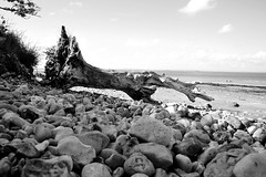 Fallen Forest, Bembridge, Isle Of Wight 03/08/2012 (Gary S. Crutchley) Tags: ocean uk travel sea england bw white seascape black tree monochrome coast seaside nikon marine harbour britain united great kingdom coastal fallen and nikkor seafront isle vr wight afs iow bembridge ifed 24120mm f3556 of d700