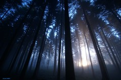 Premire lueur du soleil dans les picas   ** first light of sun in the forest ** (francky25) Tags: light sun les forest soleil first du dans premire doubs lueur comt franche alaise picas