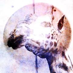 "Giraffe (""Cisco Kid"") Tags: color texture animal photoshop giraffe"