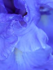 Iris (nartenimages) Tags: blue iris abstract flower fleur blu wave bleu fiore