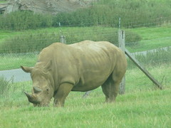 """Longleat Safari Park • <a style=""""font-size:0.8em;"""" href=""""http://www.flickr.com/photos/81195048@N05/8017722760/"""" target=""""_blank"""">View on Flickr</a>"""