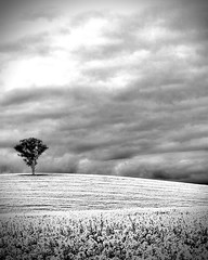 Dookie Hills (Andrew Fleming Photography) Tags: trees sunset storm silhouette canon landscape iso100 australia andrew victoria hills f16 dookie 7d hdr canola fleming andrewfleming goulburnvalley centralvictoria canonef2470 canoneos7d greatershepparton canoneos7d andrewfleming