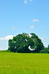 Tree in a field (agent_ochre) Tags: yahoo:yourpictures=yoursummer