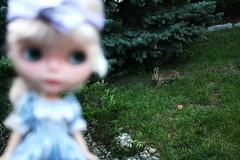 savannah sees a bunny