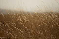 Oregon Grass (Kevin_Barrett) Tags: grass oregon minolta sony beercan oregontrail alpha a700