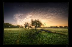 Dewdrunk trunk (Kemoauc) Tags: morning tree green fog sunrise nikon dusk dew trunk hdr topaz photomatix d300s kemoauc