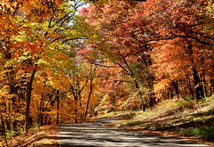 Fall drive in Geode Park (Cole Chase Photography) Tags: autumn trees color fall iowa falldrive colorfulleaves geodestatepark geodepark
