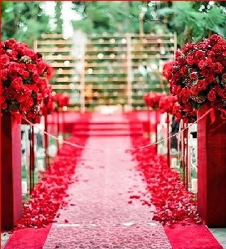 Rose petals cover sides of aisle