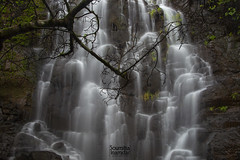 We take photos as a return ticket to a moment otherwise gone . . . (soumitra911) Tags: waterfall long exposure waterblur tree leaves jungle forest bark beautiful serene water rain monsoon silk route pune warandha maharashtra india