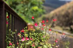 The railway fence (Nathalie Le Bris) Tags: fence railway flower hff