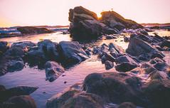 Blisters Rock... (Damien Manspeaker) Tags: shell beach pismo california water ocean beautiful blue x100 colors sand outside adventure nature sky purple bird rock rocks sunset