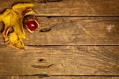 Tabletop - Herbst (Gruenewiese86) Tags: herbst autumn kastanie stock blatt hintergrund jahreszeit bltter laub wrfel cube weis weiss untergrund cc creative colour colours commons nature weiser holz brett holzbrett alt draufsicht top view 24105 canon 6d