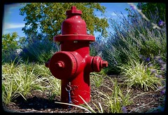 Red fire hydrant (mrgraphic2) Tags: indianapolis indiana red fire hydrant