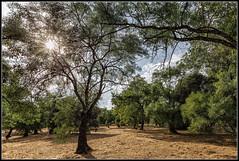 Caluroso contraluz (Fernando Fornis Gracia) Tags: espaa madrid sanlorenzodeelescorial paisaje landscape rboles nubes jardn naturaleza contraluz