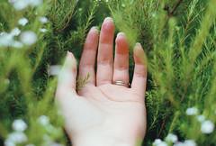 A pillow (Katie Tarpey) Tags: hand bush soft depthoffield film kodak kodakgold400 flowers green plant nikonfm10 nikkor50mm14