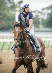 Practical Joke (EASY GOER) Tags: horse equine racing sports thoroughbreds canon 5dmarkiii 400mm 56 belmont park races workouts
