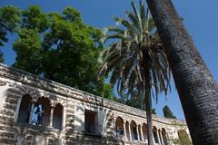 Galera del Grutesco (Bazinga!) Tags: siviglia sevilla seville realalcazar alcazar jardines jardinesdelalcazar