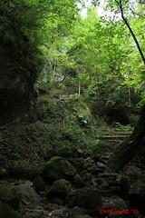IMG_8921 (Pfluegl) Tags: niedersterreich sterreich austria lower wandern hikking hiking wanderlust natur nature autumn summer rock steine geology geologie steinwandklamm klamm gorge canyon