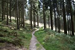 Von Willingen nach Usseln (dieter.steffmann) Tags: rothaargebirge hochsauerland rothaarsteig winterberg hildfeld hillekopf