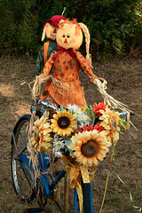 ridersDSC05639 (alans1948) Tags: halloween bicycle fall autumn sony a6000 18105