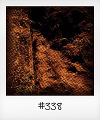 """#DailyPolaroid of 31-8-16 #338 • <a style=""""font-size:0.8em;"""" href=""""http://www.flickr.com/photos/47939785@N05/29660562472/"""" target=""""_blank"""">View on Flickr</a>"""