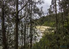 Pola costa Doce (I). (gatetegris) Tags: costadoce costadulce bosque playa mar naturaleza natureza nature beach forest trees arboles galicia carnoedo sada galiza