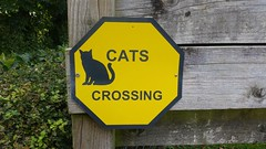 Watch for cats (oatsy40) Tags: cat signpost sign crossing