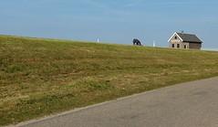 'Dijkstoel van Salland 2e Rot' (joeke pieters) Tags: 1300309 panasonicdmcfz150 dijkstoelvansalland2erot dennul overijssel nederland netherlands holland dijk dike landschap landscape landschaft paysage weg road schuur barn