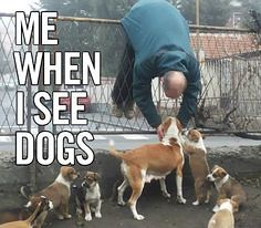 That Puppy Love (fannie.bowater) Tags: funny quotes message sayings signs