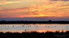 """""""al tramonto 4"""" (Nicola Armari) Tags: salina comaccio ferrara parco delta po"""