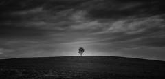 Tree Study Pt.1 (Pascal Schwab) Tags: tree landscape minimalism monochrome blackandwhite bavaria germany clouds sky horizone nikond5100 baum landschaft minimalismus schwarzweis bayern deutschland allgu