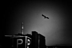 P (Al Fed) Tags: city bird dark dawn fly alone parking grain croatia p rijeka 85mmf14 20120812