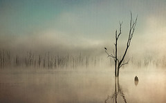 Morning Song {explored} (lovephotos10) Tags: fog textures lakemoogerah thesecretlifeoftrees