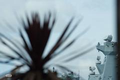 Palm Harbour