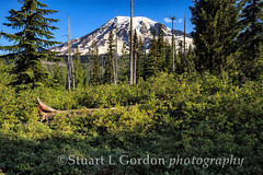 Mount Rainier from Paradise (chasingthelight10) Tags: travel mountains nature photography landscapes meadows places mountrainier mountrainiernationalpark vistas washingtonstate wildernesstrails benchlake