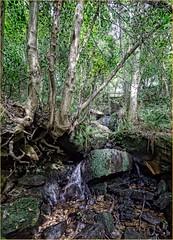 Ramsdale Wood rill (Hector Patrick) Tags: streams northyorkshire gills robinhoodsbay neygt panasoniclumixgvario714asph panasoniclumixgx1 ramsdalewood
