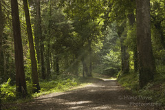 Hundred Acre Wood (Sadloafer) Tags: wood uk plant colour tree nature horizontal forest outdoors photography cornwall day branch path nopeople growth treetrunk lush footpath crowded tranquilscene beautyinnature sadloafer hansdavisphotography