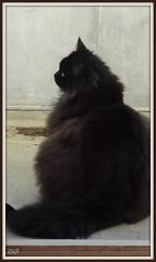 Sur le balcon - On the balcony (Zinaida Beaumont (Nous sommes Paris)) Tags: cat chat gato ike balcon katz rl reallife onex friendsofzeusphoebe ringofexcellence balconyappartementapartmentflat
