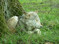 """Longleat Safari Park • <a style=""""font-size:0.8em;"""" href=""""http://www.flickr.com/photos/81195048@N05/8017589226/"""" target=""""_blank"""">View on Flickr</a>"""