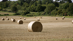 EARLY OCTOBER (cpre) (Adam Swaine) Tags: county uk england sky green english beautiful yellow rural canon landscape countryside kent flora britain east hayrolls 2012 counties naturelovers 24105mm thisphotorocks adamswaine mostbeautifulpicturesmbppictures wwwadamswainecouk kentishvillages kentishlandscapes