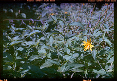 sunday with Horseman 4x5_003 copy (nefotografas) Tags: test 120 film nature lens play kodak tripod 4x5 expired lithuania vilnius horseman vcs rodenstock 150mm vericolor 051997 f5664