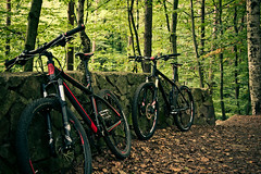 erste Ausfahrt (Erik [Got No Time To Grow Old]) Tags: brown green bike forest dresden ghost herbst bikes cube pro grn fels braun wald ltd bltter stein fahrrad heide mauer hardtail dresdner ebs