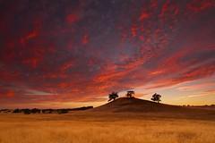 Three Oak Knoll (ernogy) Tags: sunset sky field night landscape cloudy wheat folsom sacramento knoll oaktree northerncalfornia ernogy