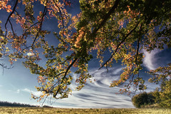Leaves in the Sky (NatureArt by Wolfgang) Tags: autumn sky fall leaves clouds herbst himmel wolken bltter