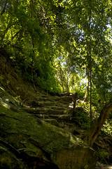 avila adentro (fedelea1962) Tags: rainforrest tropic tropico selva caracas venezuela